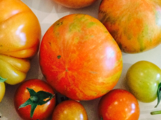 Tigerella Tomato | beetsandbutter.com - a vegetable gardening adventure